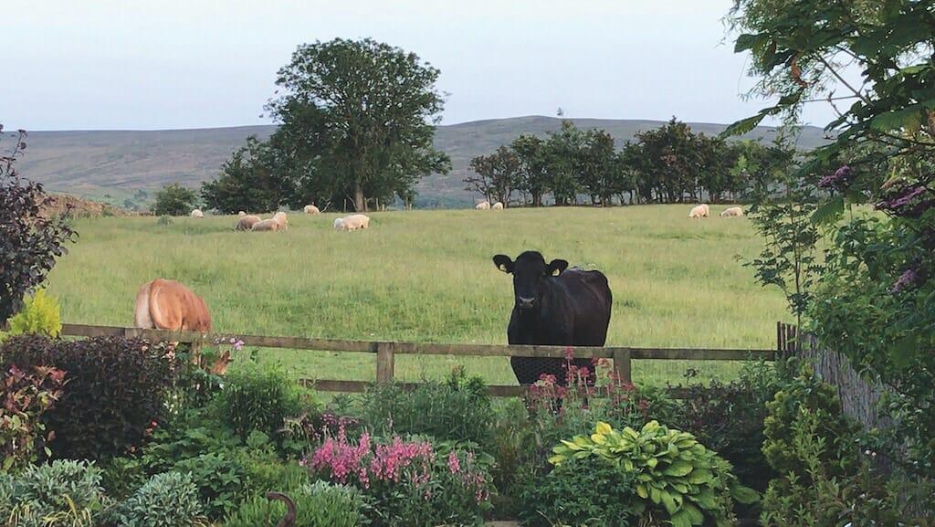 A curious beast takes a peek into a garden at Barras, in this shot by Carol Nicholson.