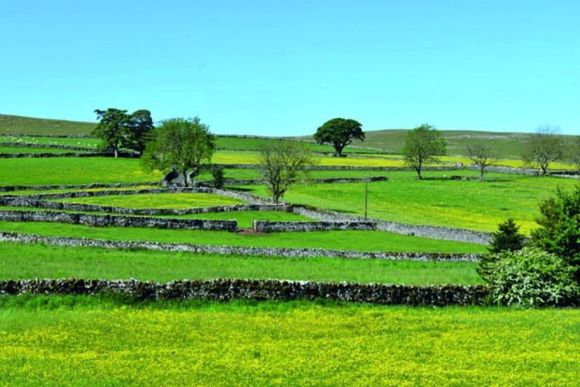 Yellow blooms decorate the fields in this photo by Hazel Deighton, of Bleatarn.