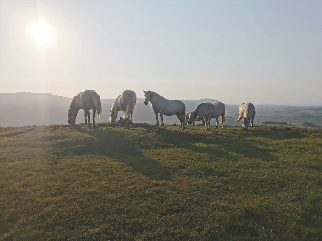 Native ponies graze in the evening light at the top of Great Mell Fell in this stunning image sent in by Kate Jackson.