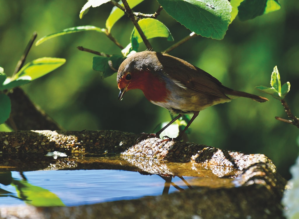 Tony Reed, of Pooley Bridge, spotted this robin checking its reflection in the bird bath in his garden.