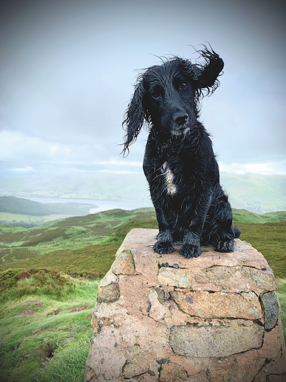 John O'Neil, of Matterdale End, took this photo of his dog Wren enjoying the summit of Gowbarrow on a wet Saturday morning.