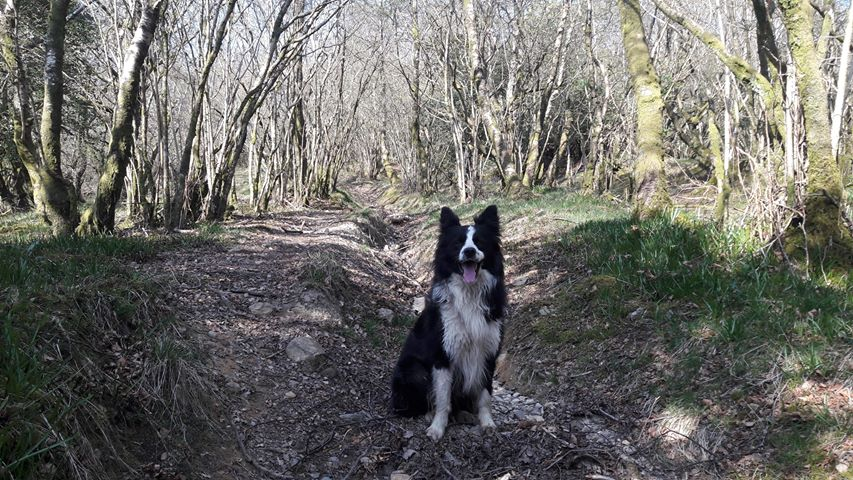 Julie Tunstall was out with her dogs Kip and Trixie in Fogg Gill, Fell End, Kirkby Stephen