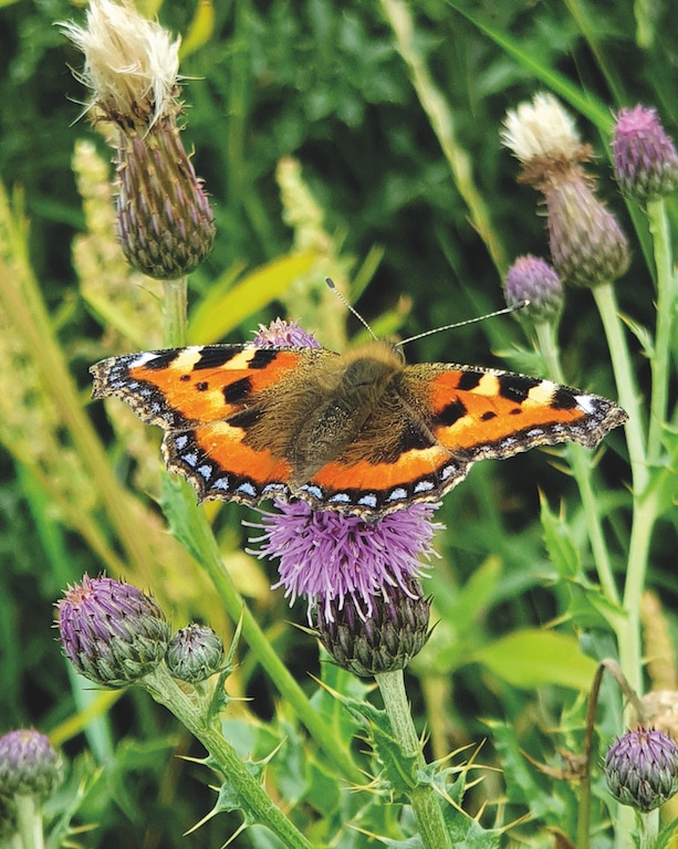 Butterfly by  Simon Furness