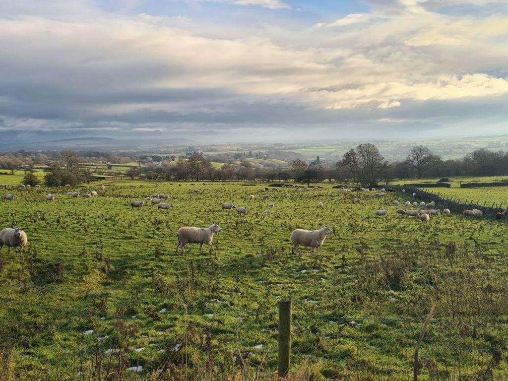 Wintry scenes near Newbiggin by Bob Price, of Stainton.