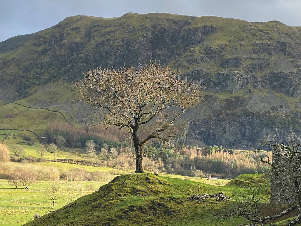 A lone tree at St John's-in-the-Vale, was photographed by Karen Barnes, of Keswick.