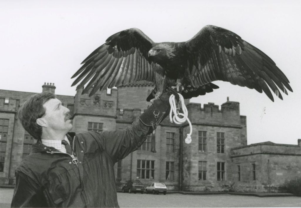 Falconer Gary Worley with Saxon, a golden eagle from the National School of Falconry based at Inglewood Bank, Penrith. Saxon had just made his first public appearance at Greystoke Castle.