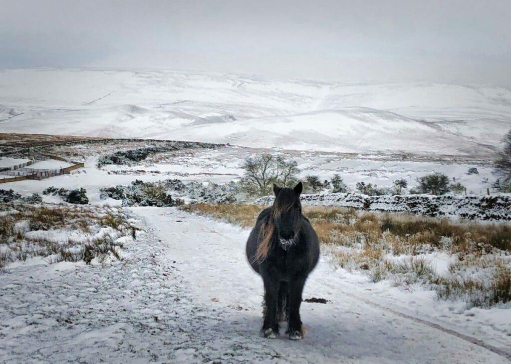 Milburn fell pony by Bethany Collin