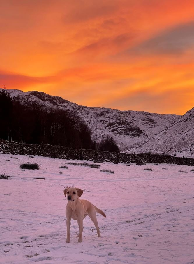 Betsy at Thirlmere by Dora Brown
