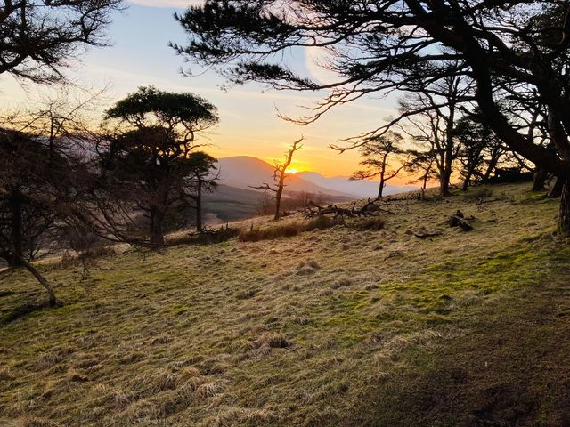 Clive Rowlandson on Great Mell Fell with his dog Alpha
