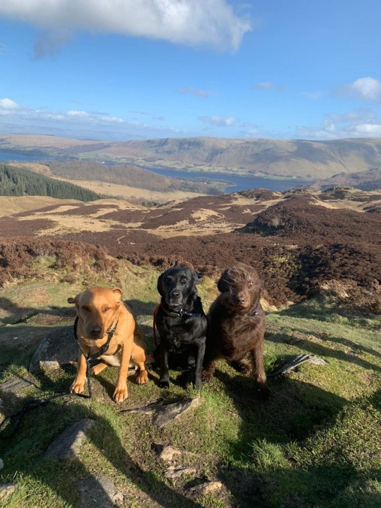 Emily Todd took this sunny shot of her well positioned dogs on Gowbarrow Fell
