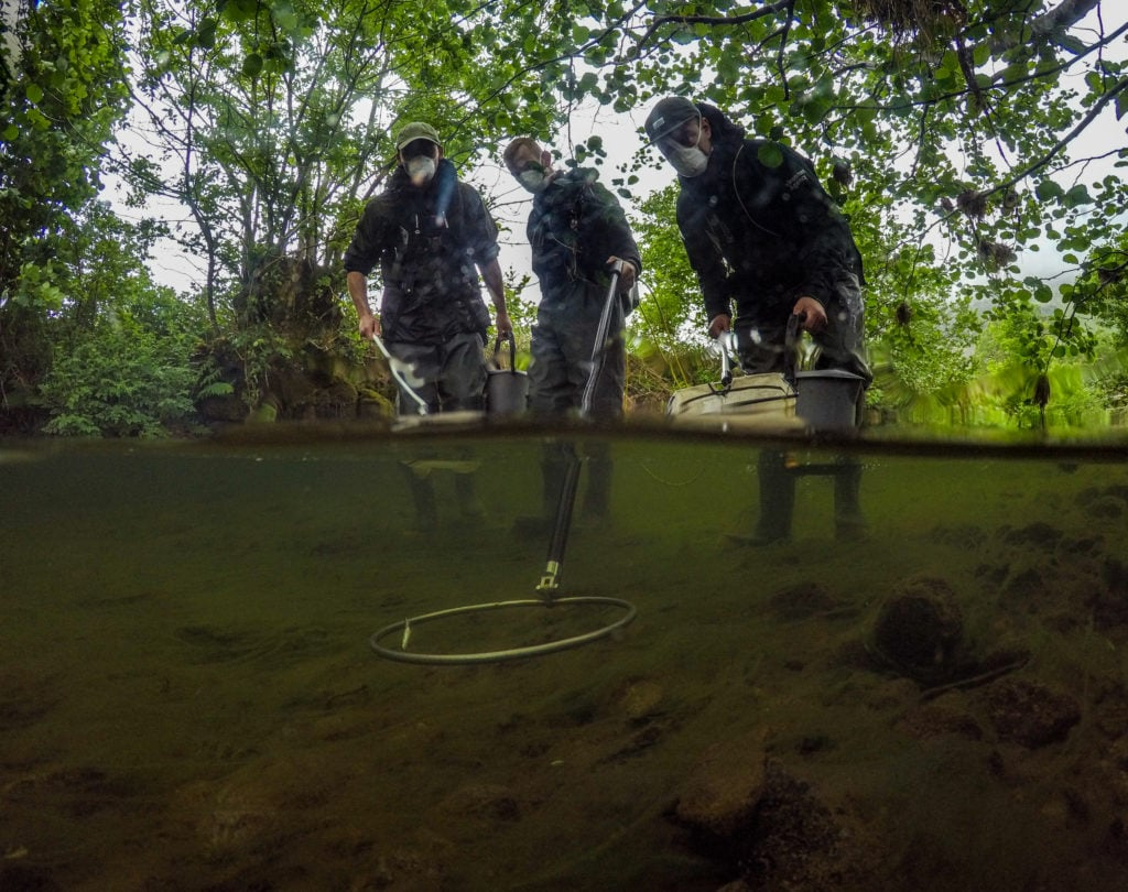 The National Trust and the Environment Agency are working to improve flood resilience and create better habitats for nature in the Ullswater Valley. Pictured is the fish rescue in Goldrill Beck